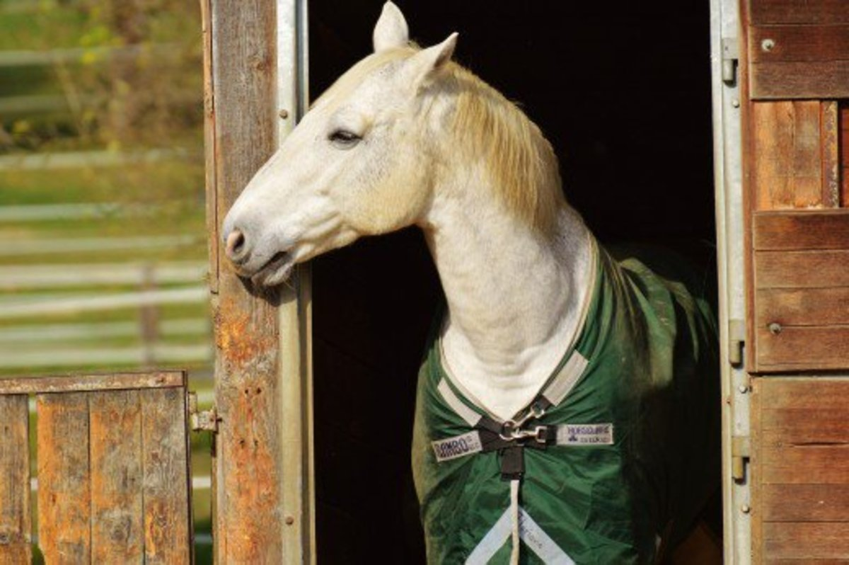 A blanketed horse waiting under shelter