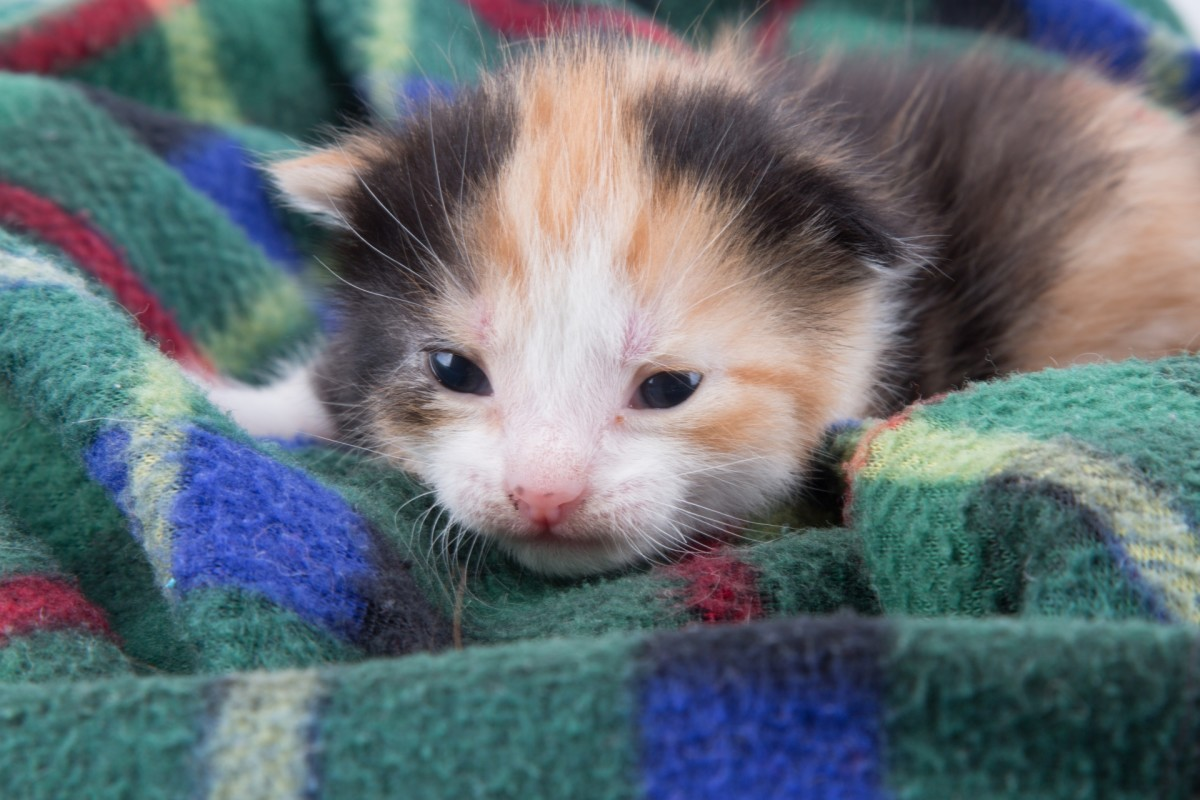 How to Care for Stray Kittens: A Guide to Raising Feral Kittens