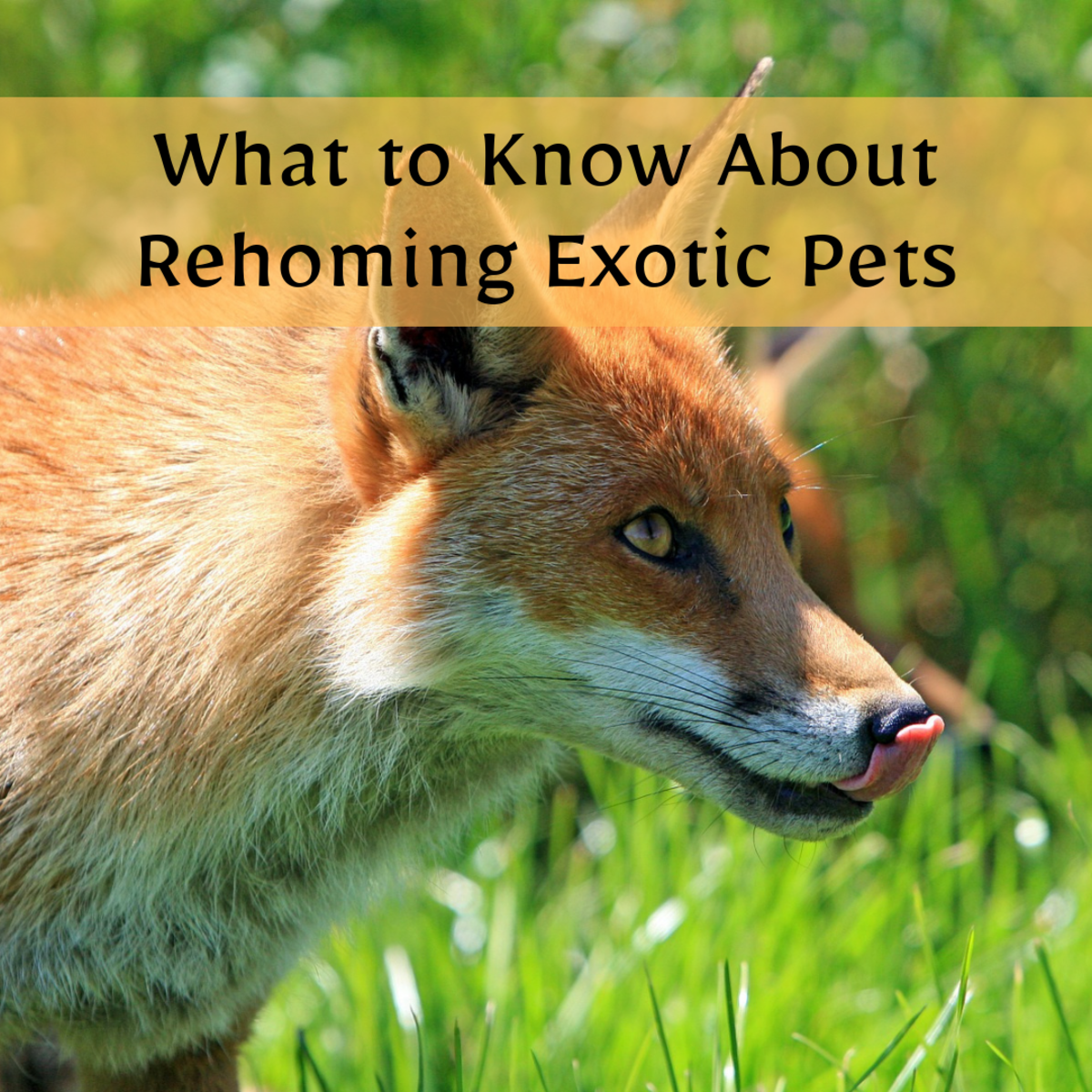 A rehomed exotic pet may seem like a good, inexpensive option, but these pets require experienced owners.