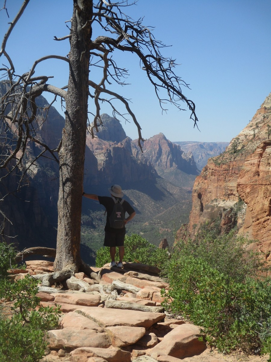 This lone dead tree provides relief from the crowds as well as a spectacular view of Zion Canyon, photo by author