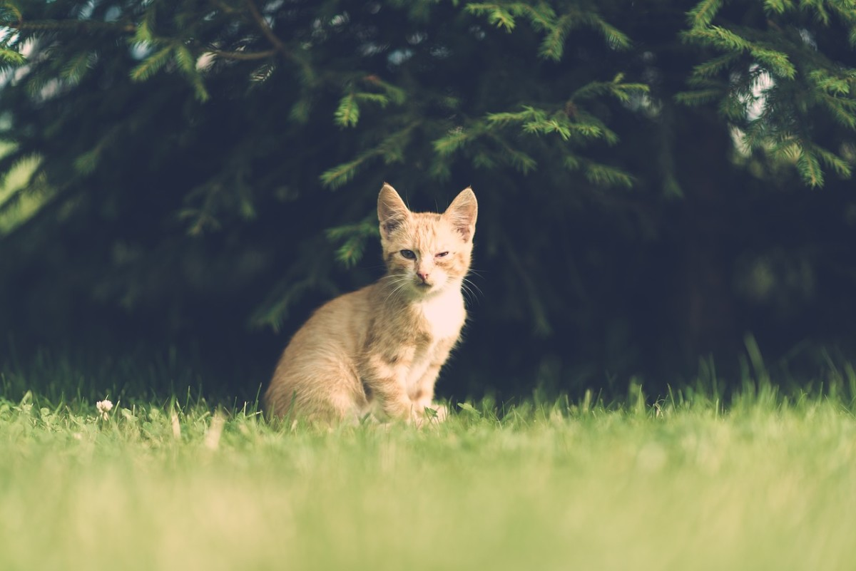 Limiting the cat's outdoor time is one way to prevent fleas