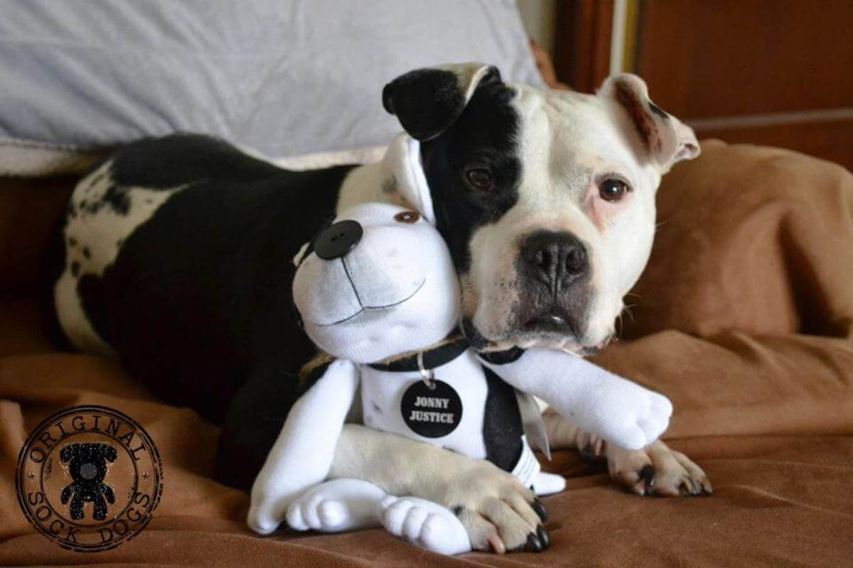 Things I Learned From the Stereotypes Surrounding Pit Bulls