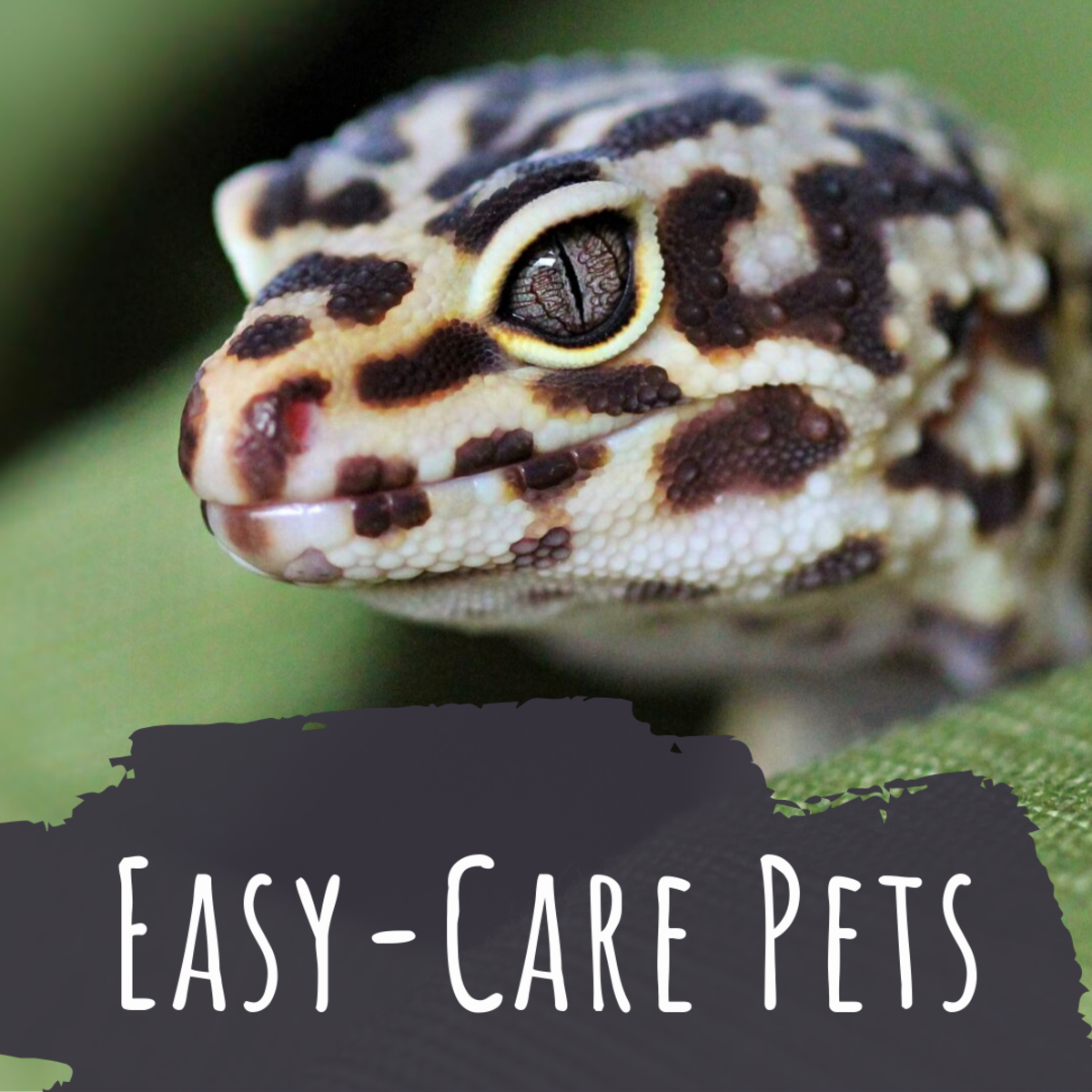 Which pets are the easiest to take care of?
