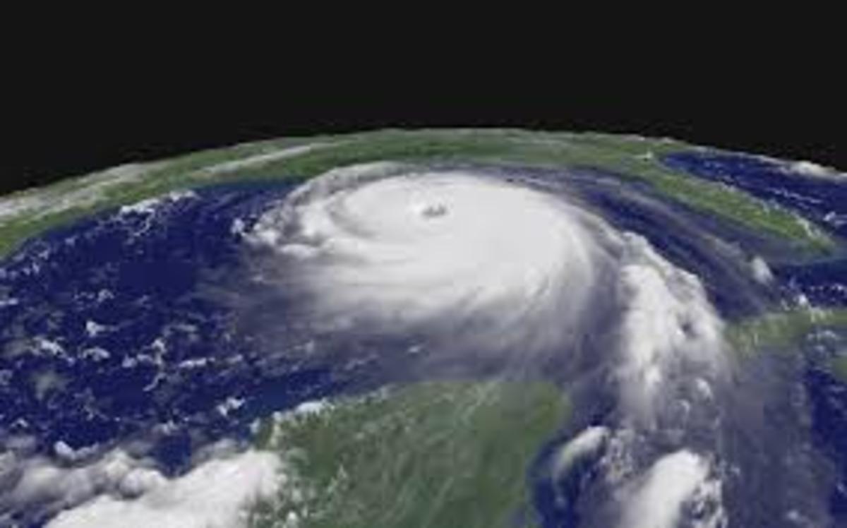 the-hurricane-katrina-trump-interview