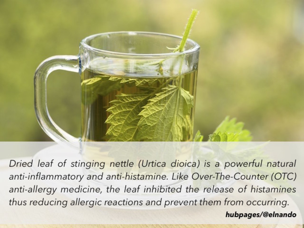 Stinging nettle or scientifically known as Urtica dioica is one of many popular herb-based natural allergy therapies - thanks to its antihistamine effect.