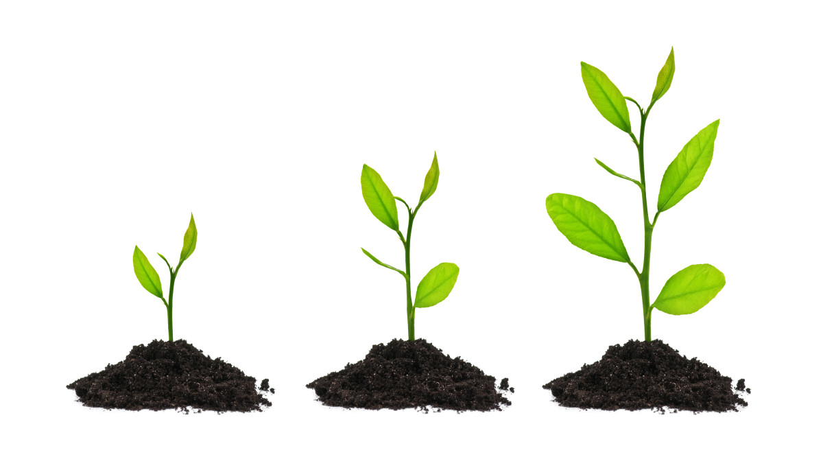 Growing is part of life, and being resilient means you see chances for growth for yourself whenever you face a problem.