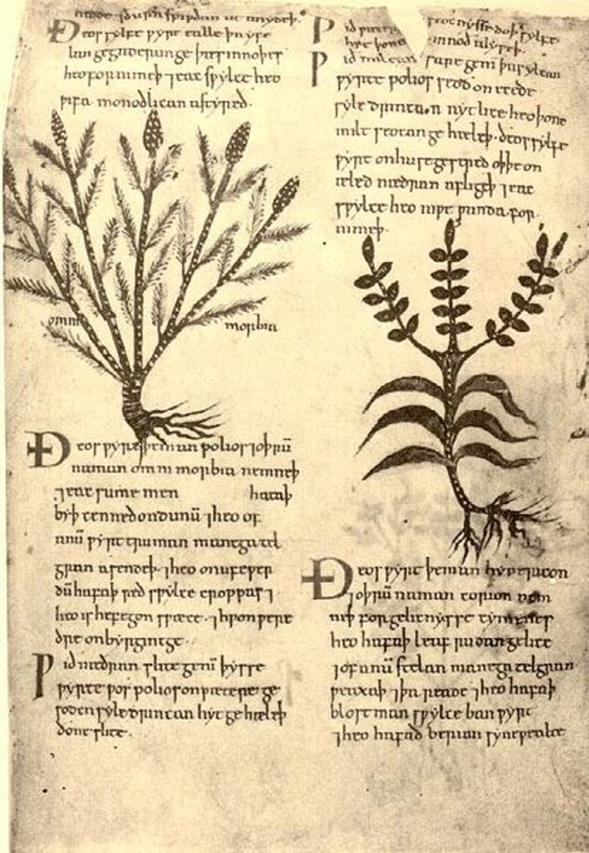 The Nine Sacred Herbs of the Anglo-Saxons (public domain)