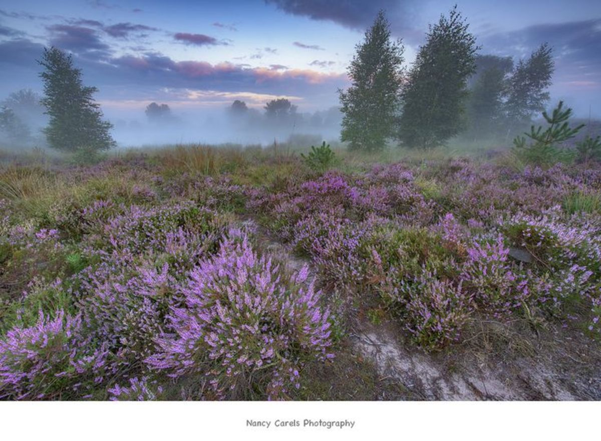 Foggy Heather Downs (Wiki Commons)