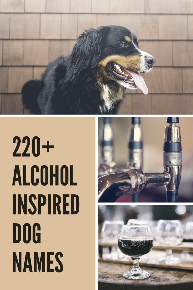 220+ Fun Alcohol-Inspired Dog Names | PetHelpful