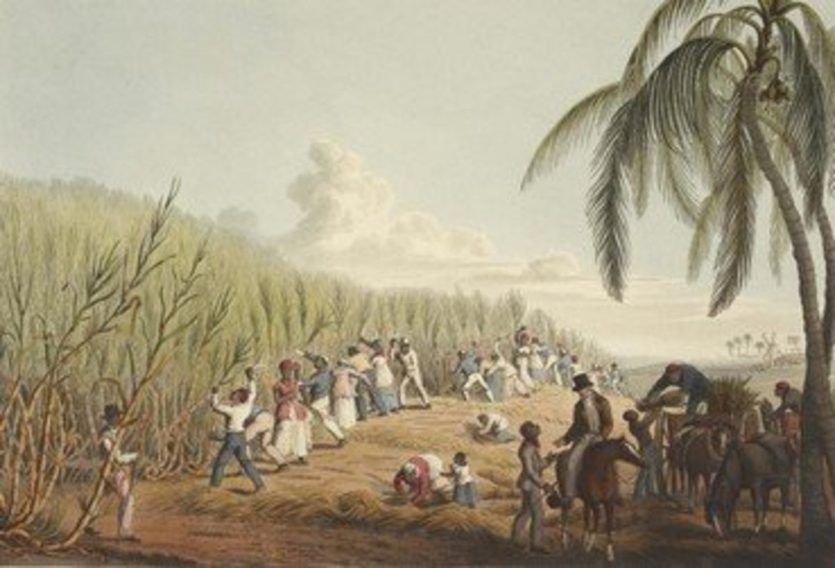 During and after the colonization of Trinidad, sugar cane was an important agricultural crop