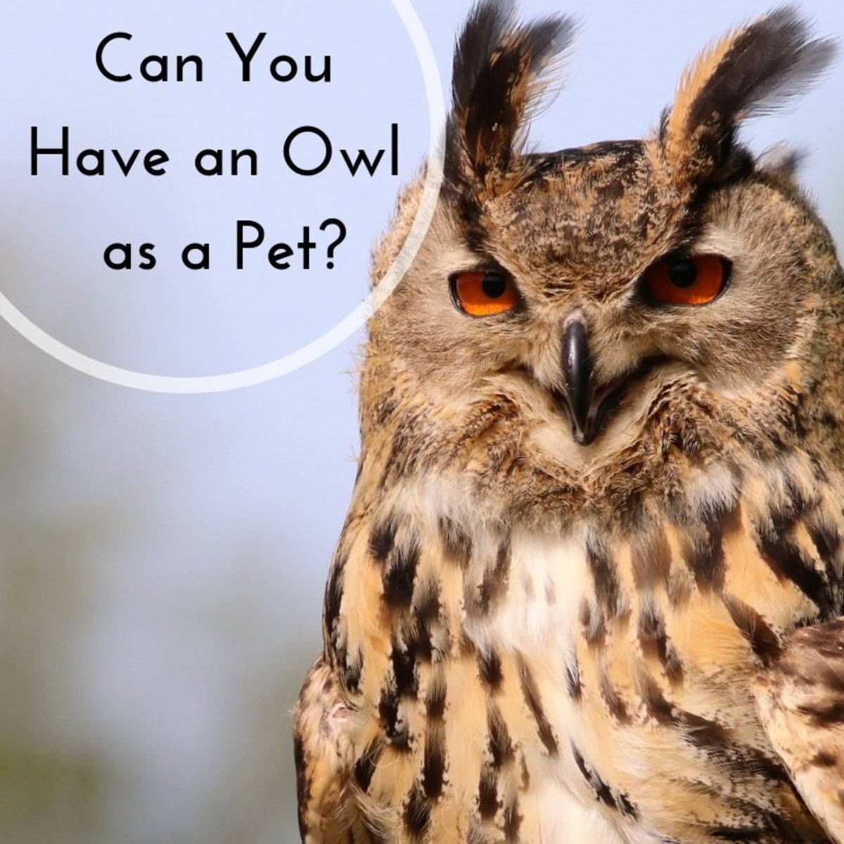 Keeping Owls as Pets: Is It Legal?