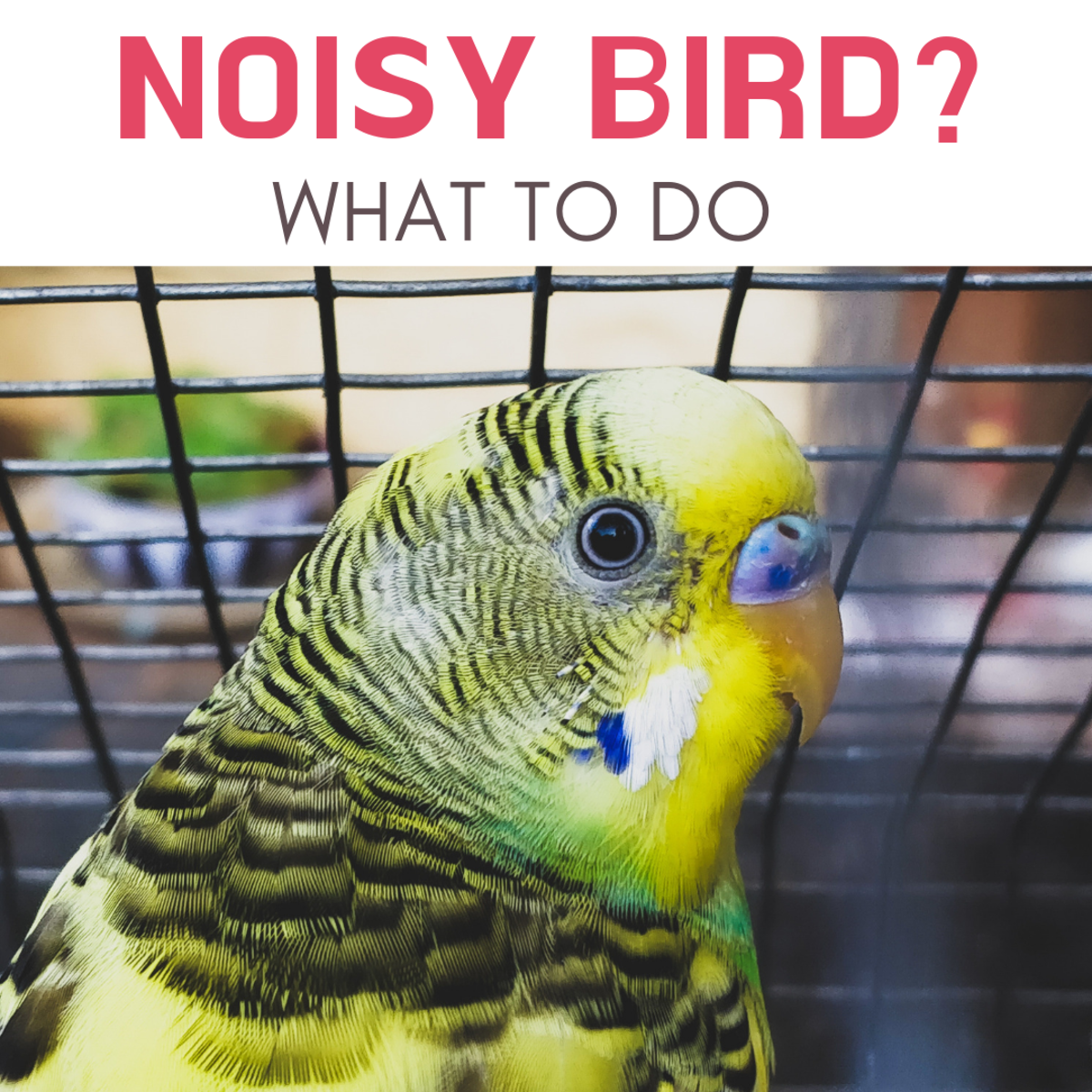 How to deal with a noisy parakeet.