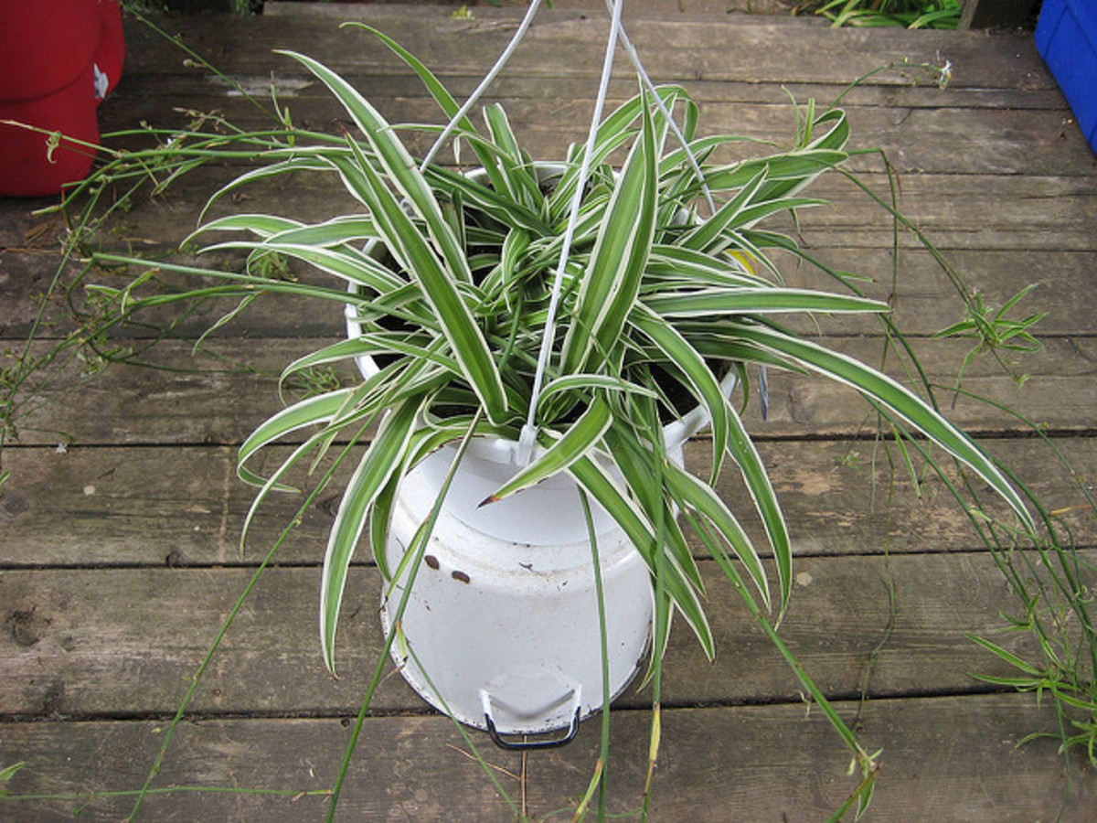 Houseplants can benefit from recieving reiki energy.
