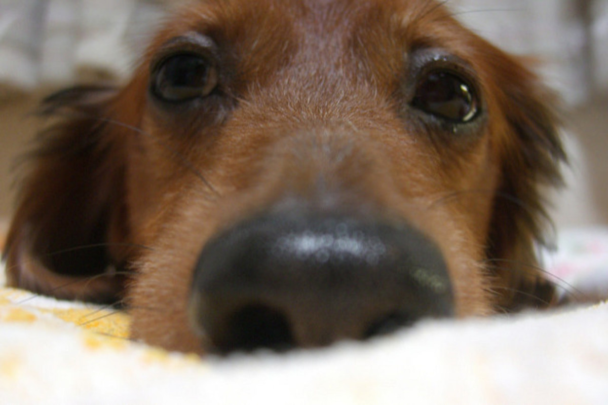 6 Disadvantages of Having a Dog in the House for Trying-to-Conceive (TTC) Couples