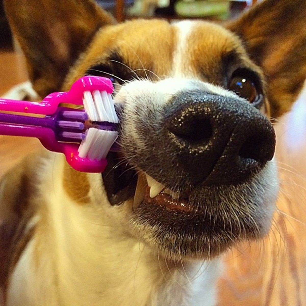 Dogs benefit from regular brushing just as humans do.