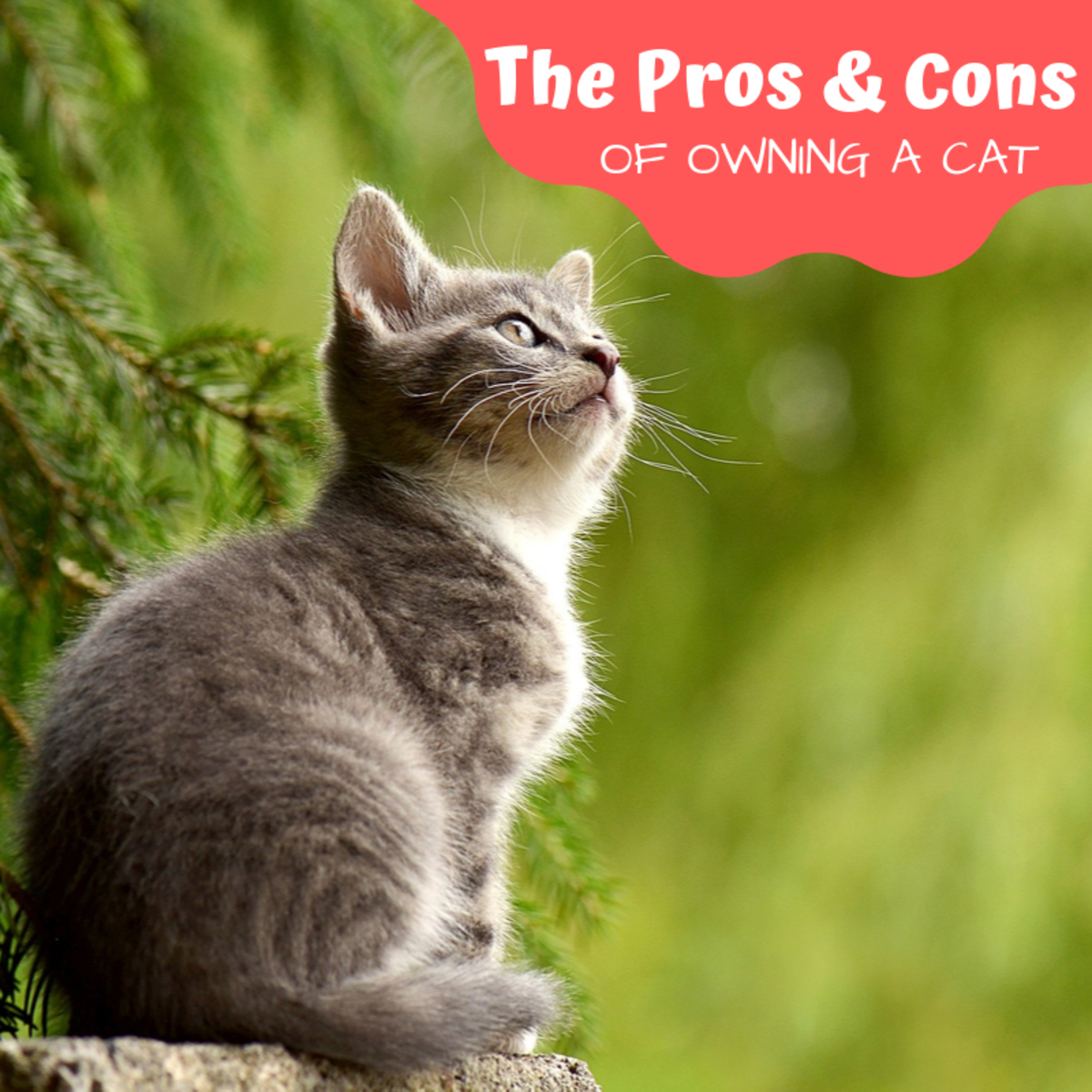 The Pros and Cons of Owning a Cat