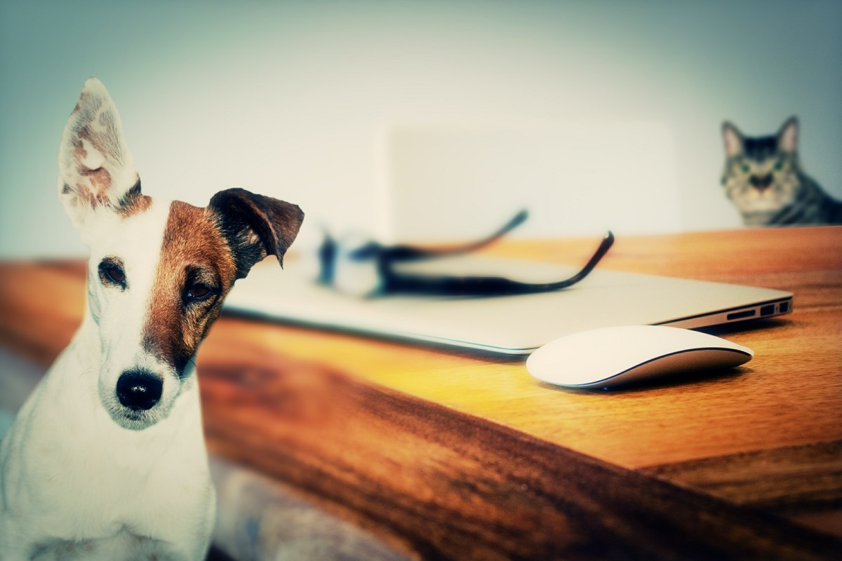 Caring for Your Pets: A Guide for Those Who Travel Frequently