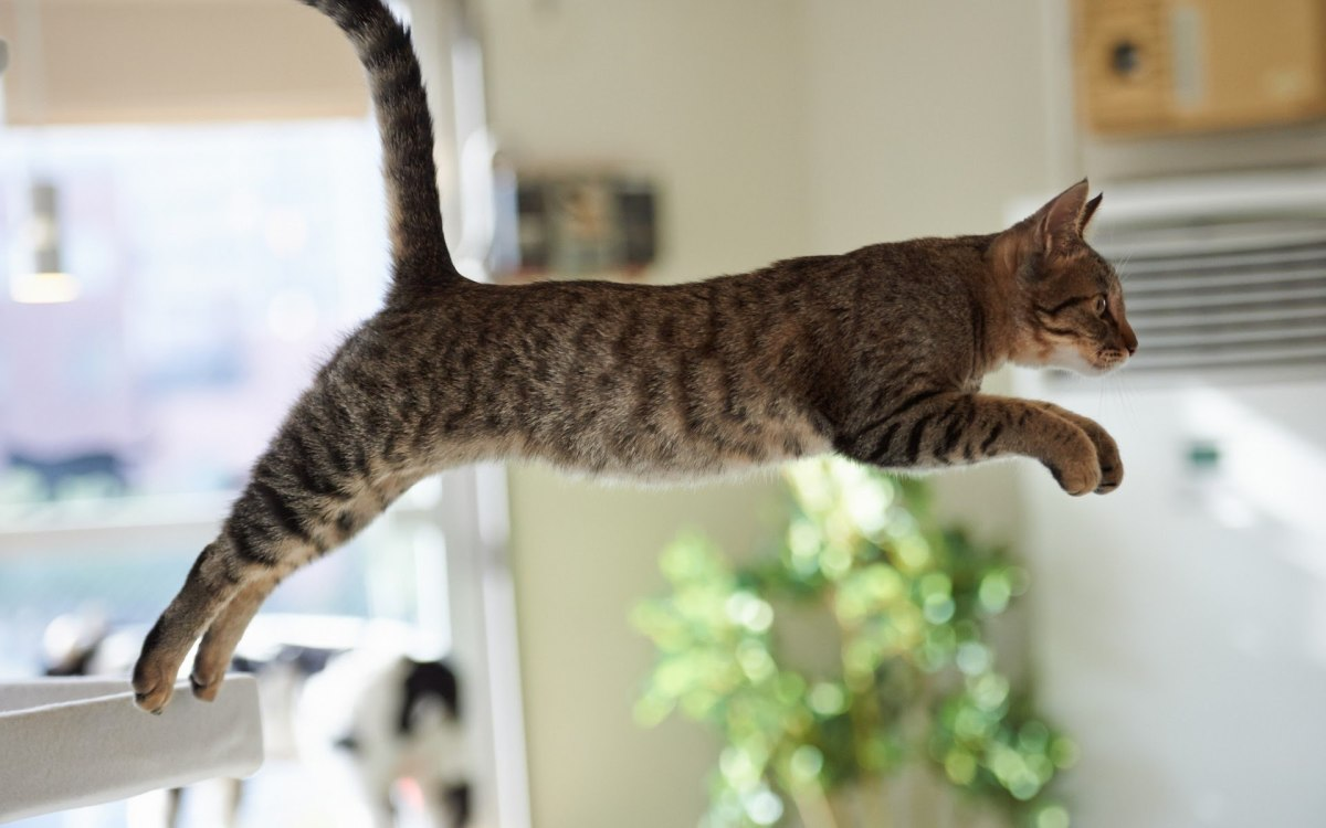 Cats and Gravity