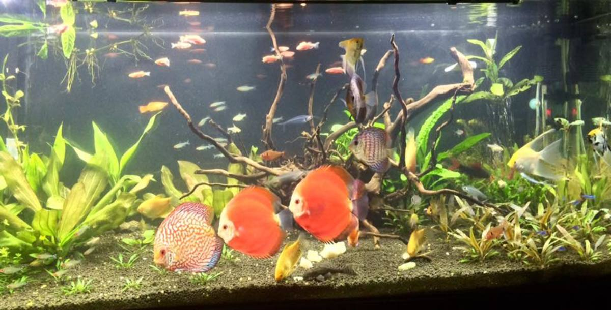 Aquarium Tips For Beginners