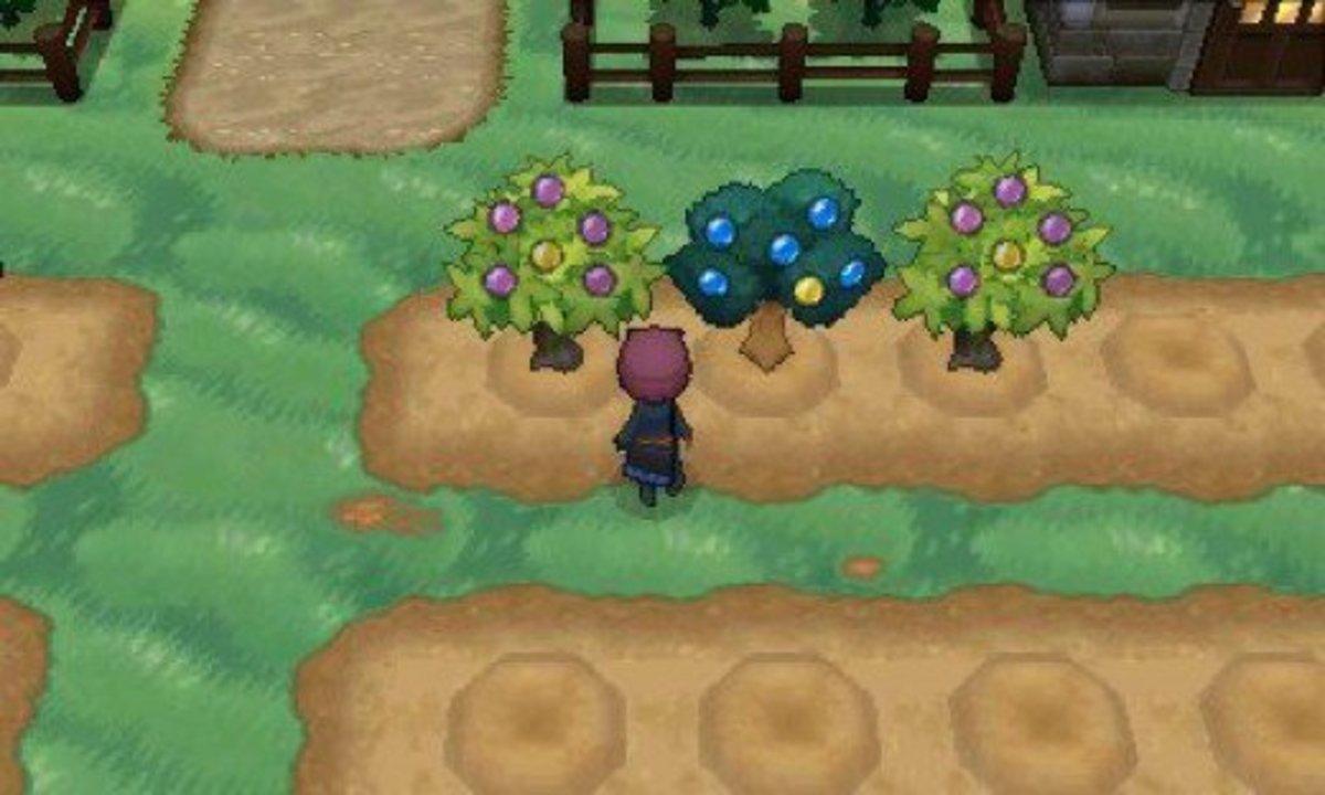 Tending the Berry Farm