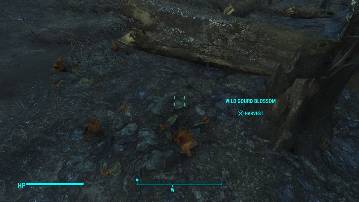 Wild plants grow everywhere in Fallout 4. So, be sure to harvest any you come across.