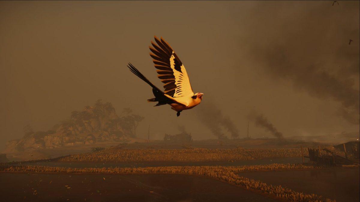 Follow the golden birds