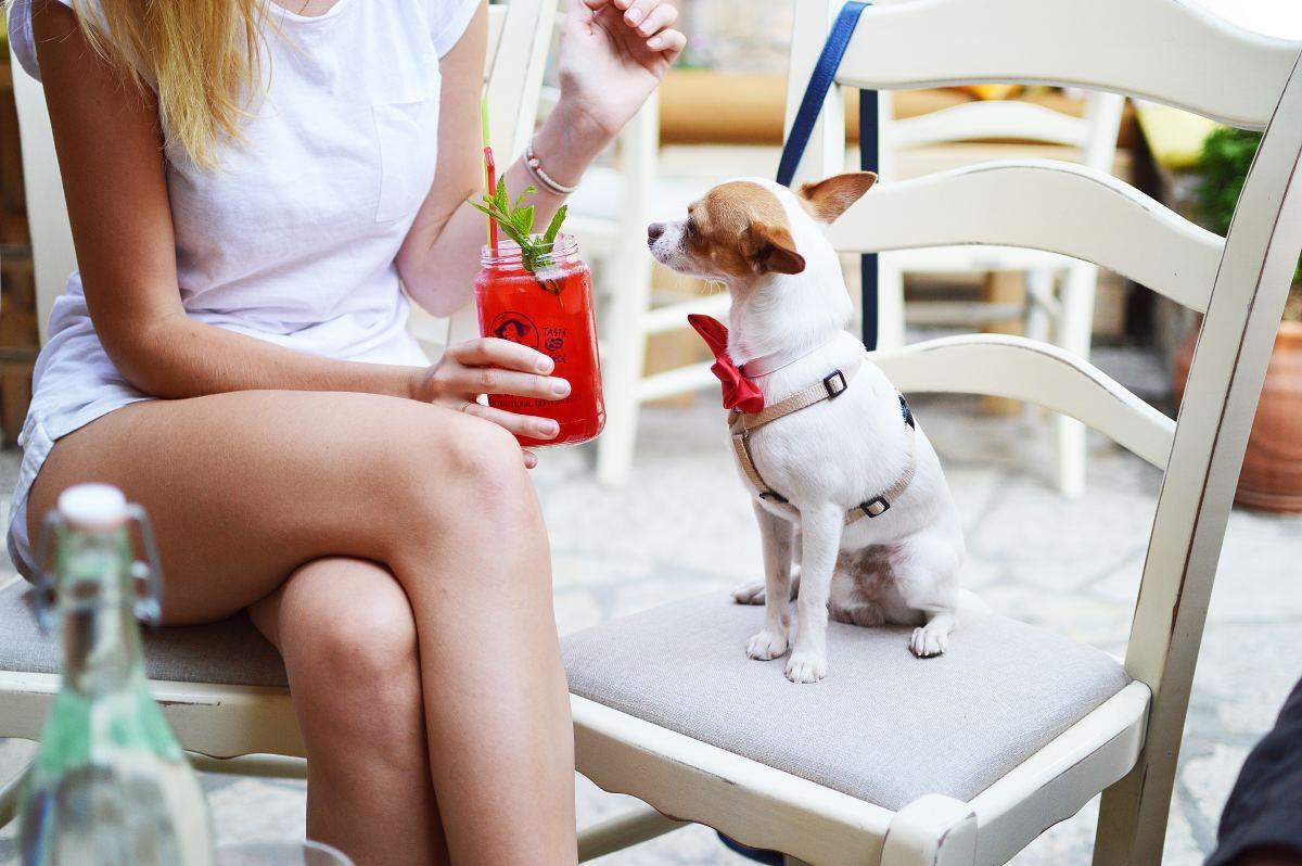 8 Top Reasons You Should Get a Pet!