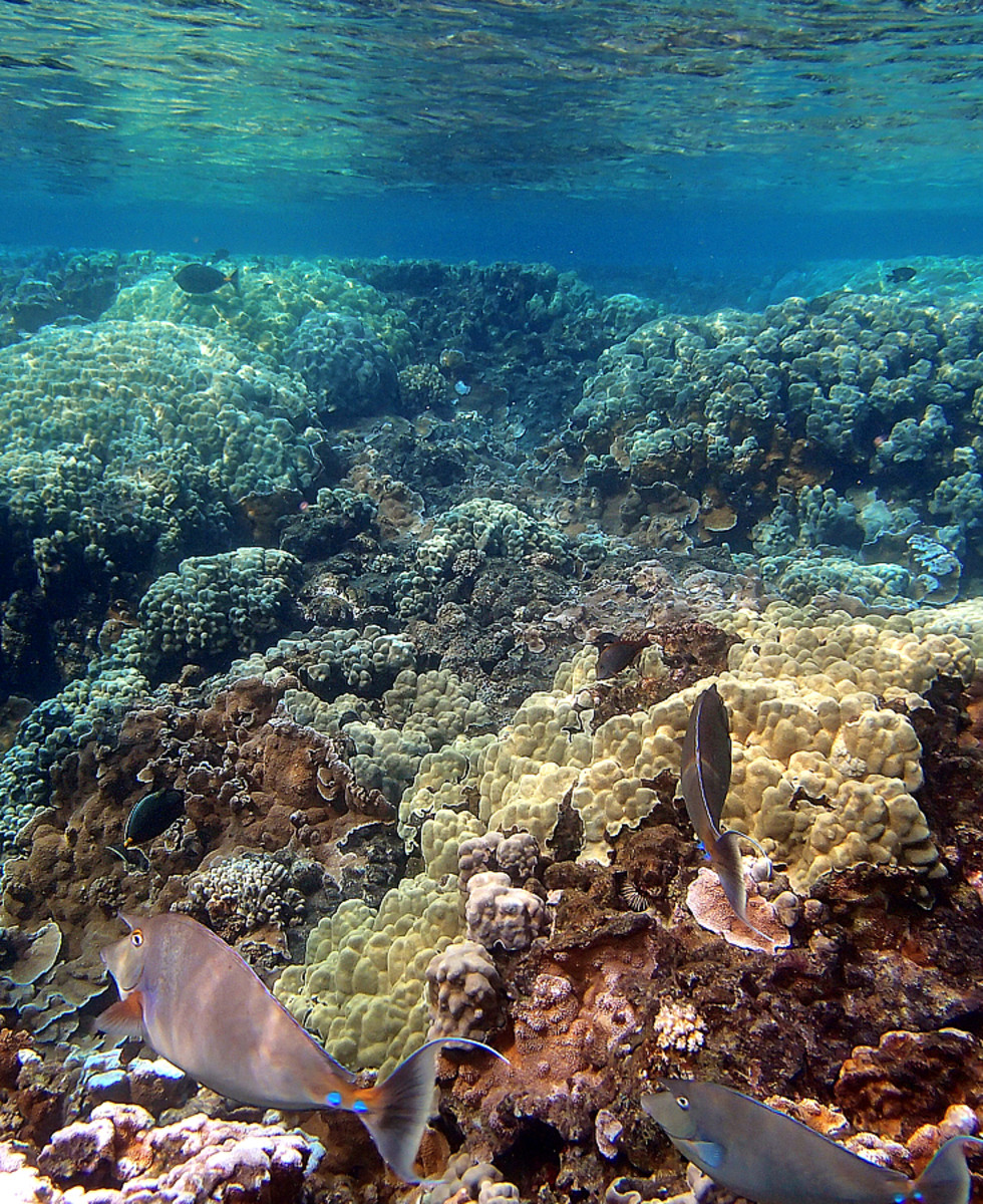 Hawaii: Snorkeling Anyone? A Guide to Your Safe and Fun Underwater Adventure