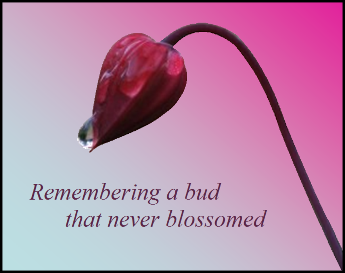 A Bud That Never Blossomed