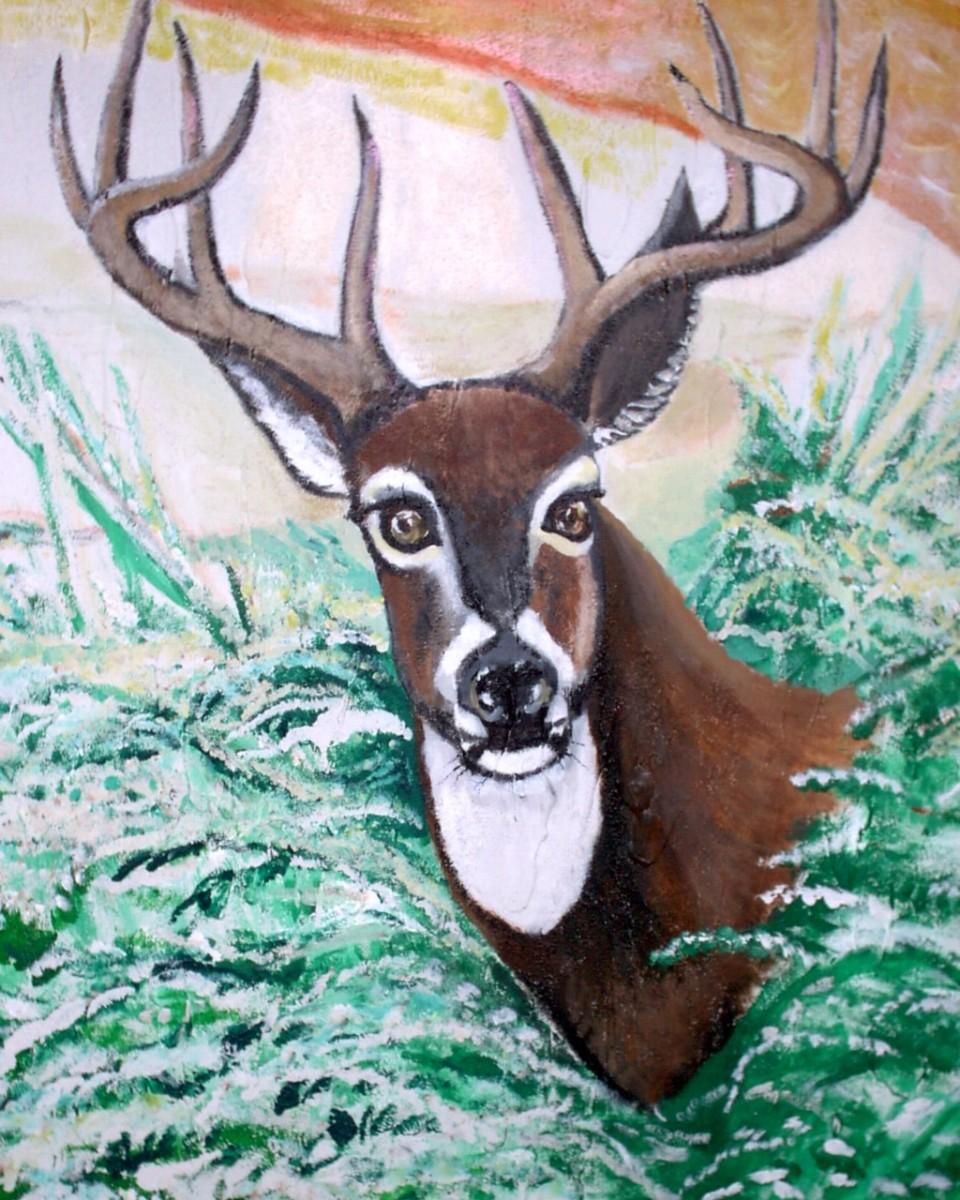 Big Buck Deer