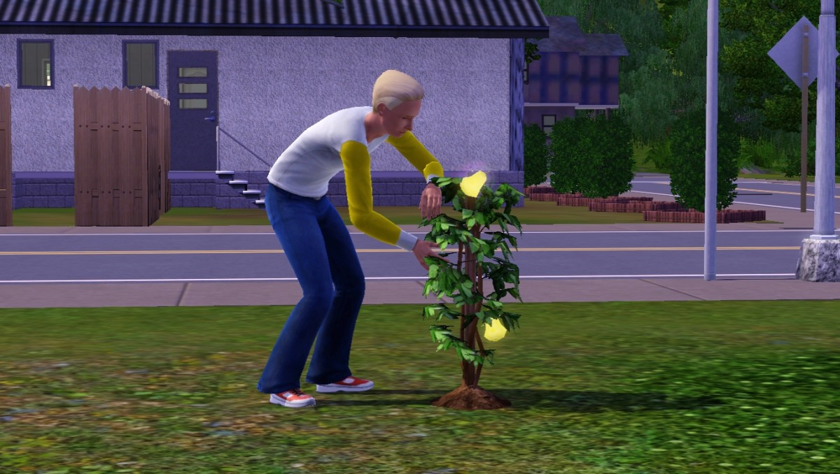 A Sim tending to his life fruit plant.