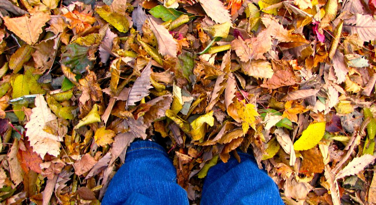 How to Take Stunning Autumn Photos