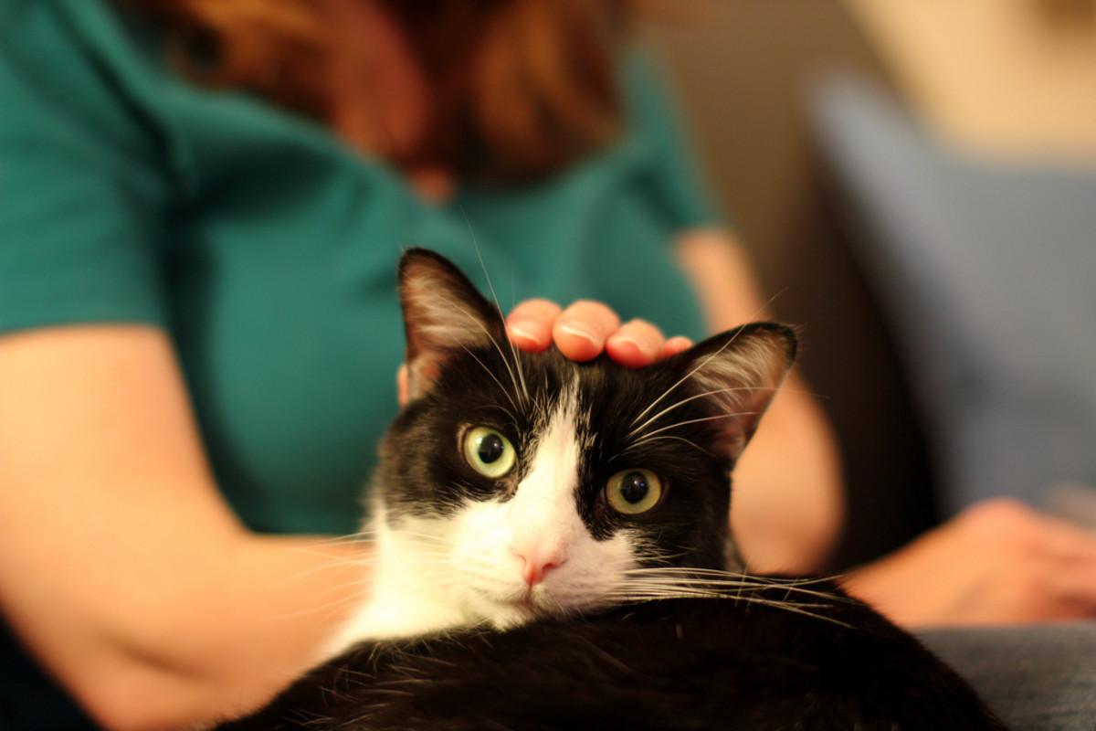 Patting cat on the head