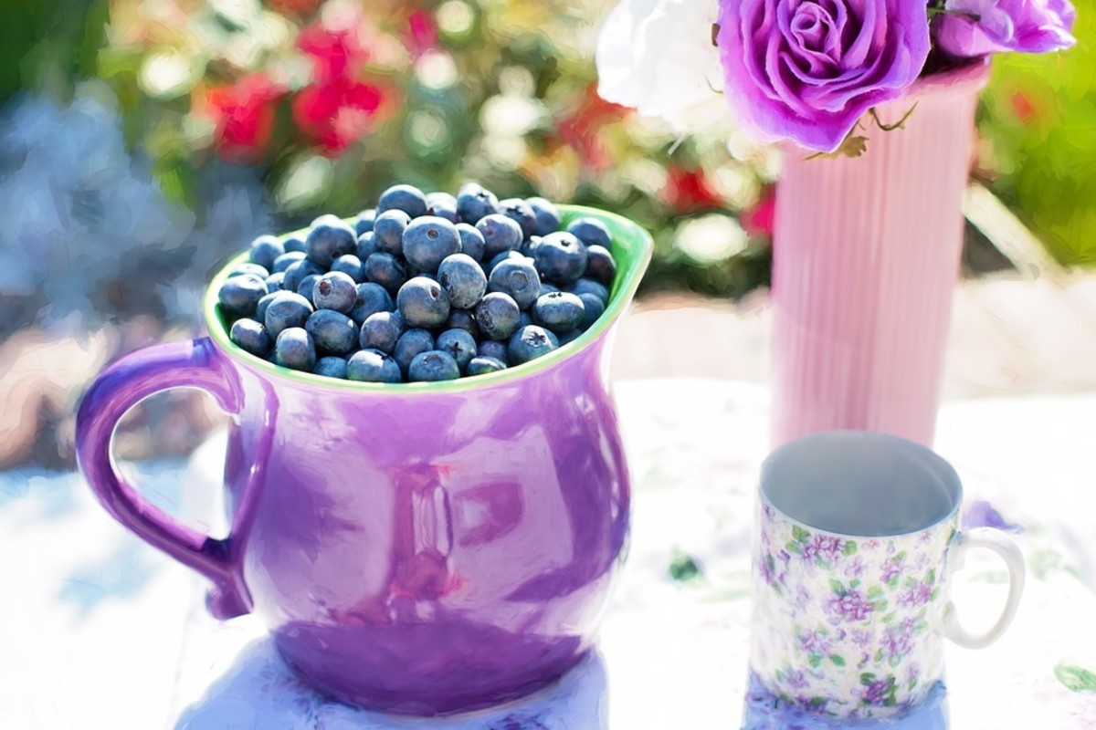 Blue berries treat bacteria