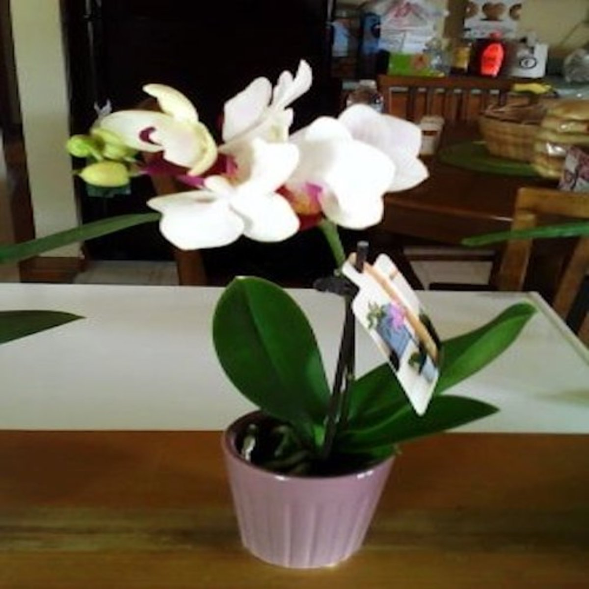 During our grocery shopping at Trader Joe's, one of their sales associates gave me a cut orchid. She saw I was carrying my chemo pump, and she wanted to make me feel good! What a thoughtful act of kindness!