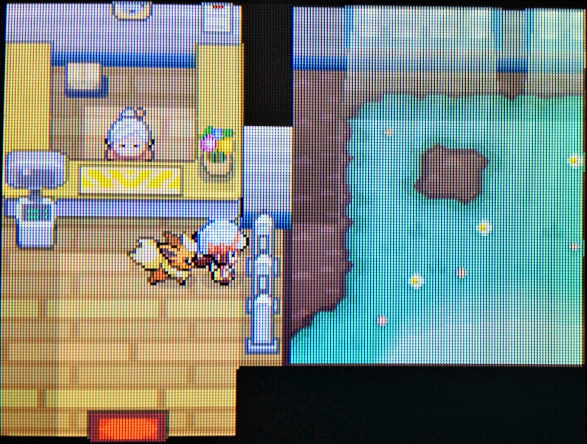 In some games you can watch your Pokémon playing together at the Day Care!