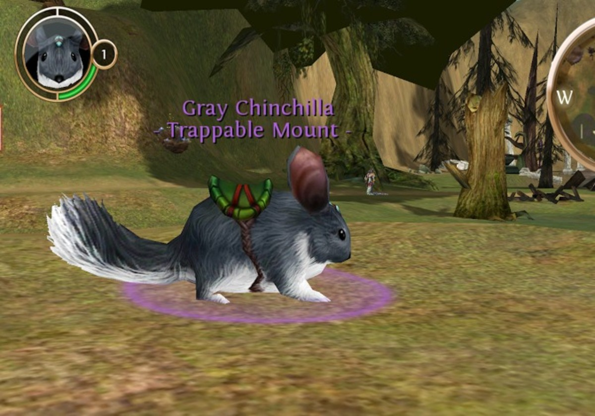 Grey Chinchilla in Akan's Field in Order and Chaos