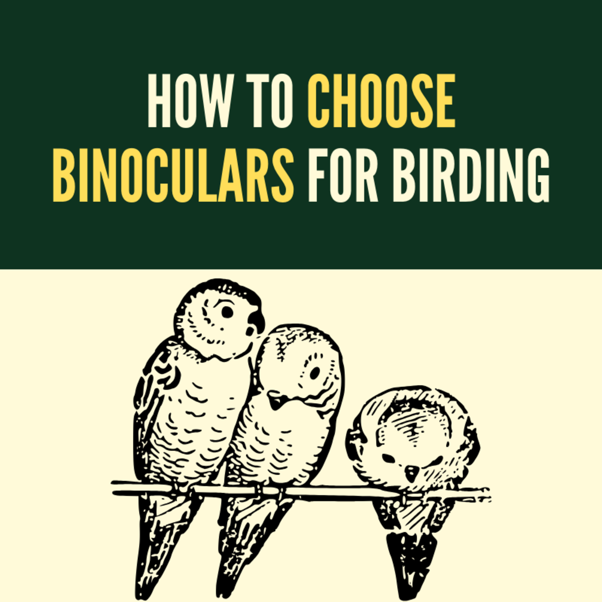 Choosing the right binoculars is pivotal for enjoying your birding experience.
