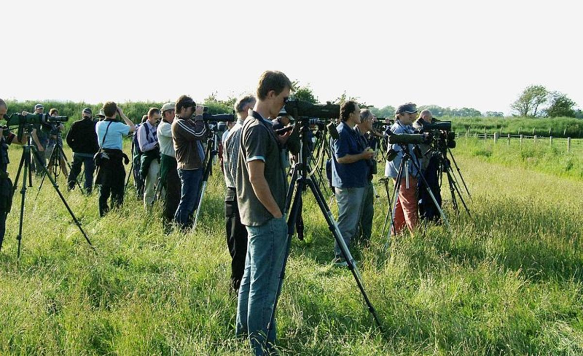 Birders/Twitchers at Caerlaverock, Scotland back in June 2007 watching just the fifth White-tailed Lapwing to be recorded in Britain.