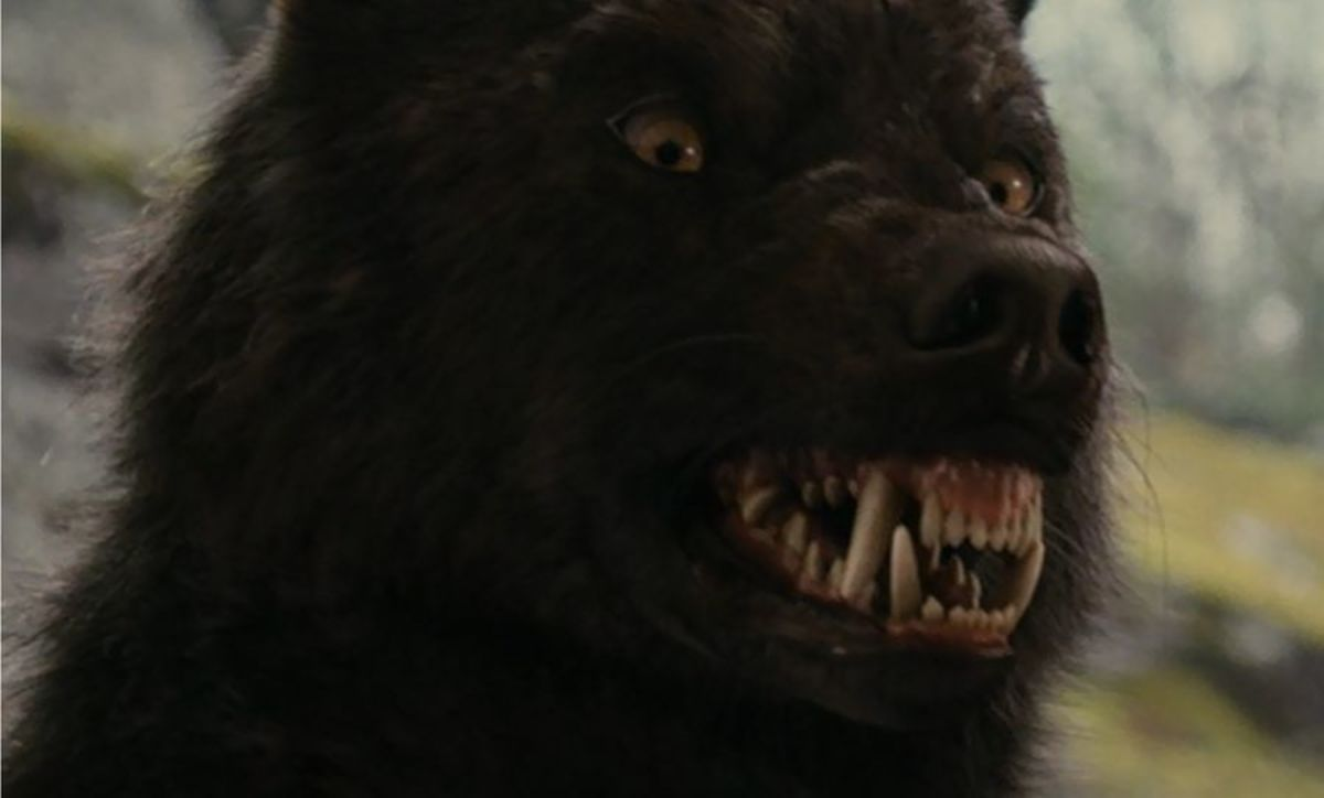 Sam Uley in wolf form