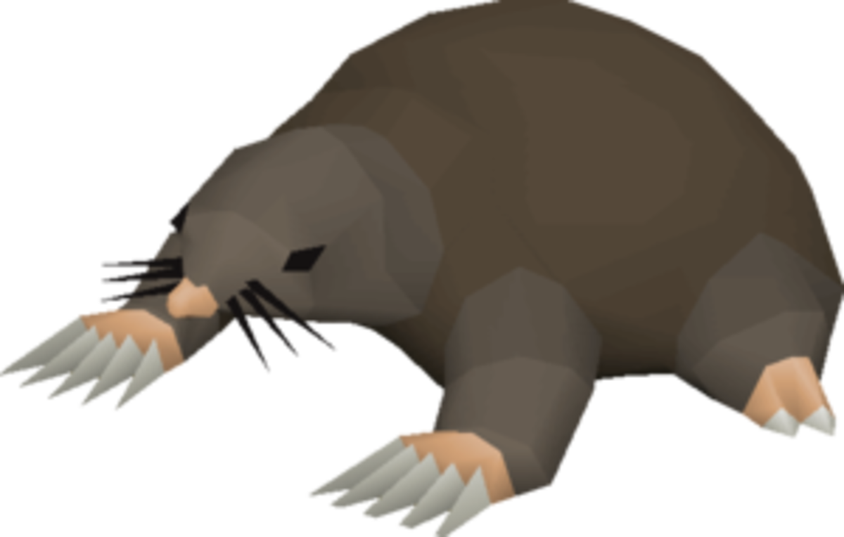 The Giant Mole: Found under the Falador Park.
