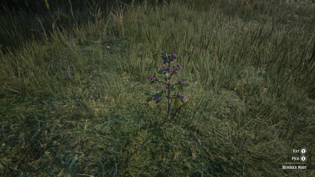 This is Burdock Root which also grows around the water's edge (just not as often as Common Bulrush). Collect this as well to craft Potent Bitters with Hummingbird Sage. Also make sure to have a full stock of this in your Inventory for later.
