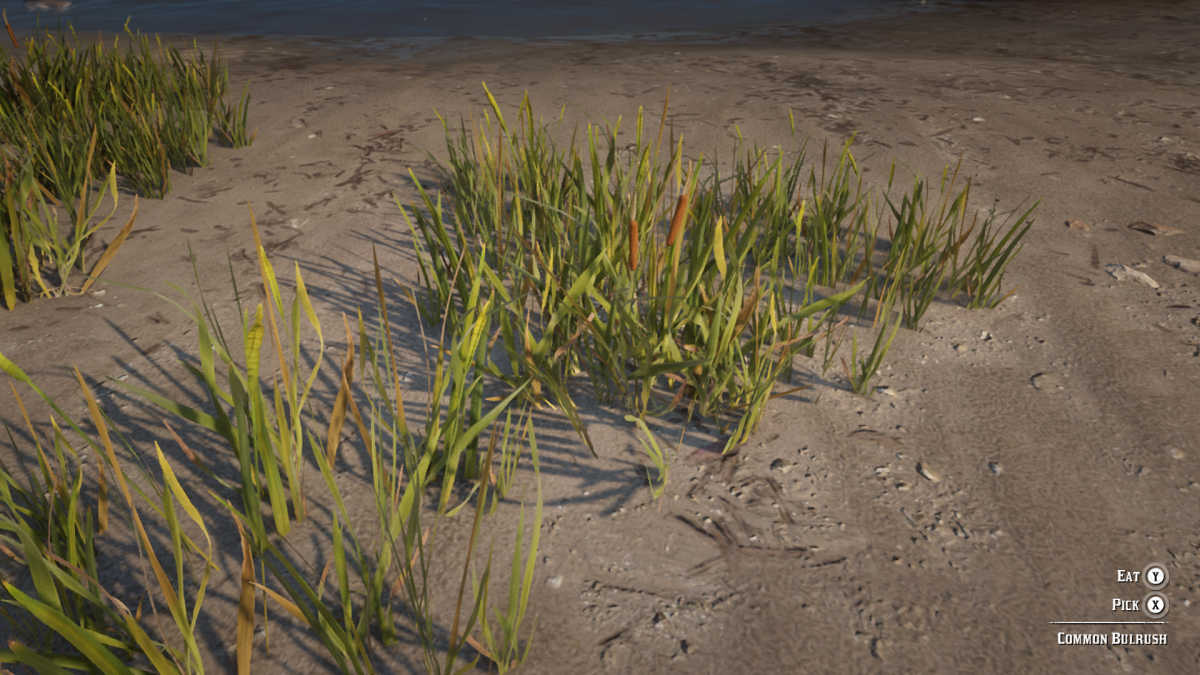 This is Common Bulrush, you can find this abundantly around the waters edge of any area in the game (check up and down the Dakota River). Use this in conjunction with Hummingbird Sage to make Potent Horse Stimulants.