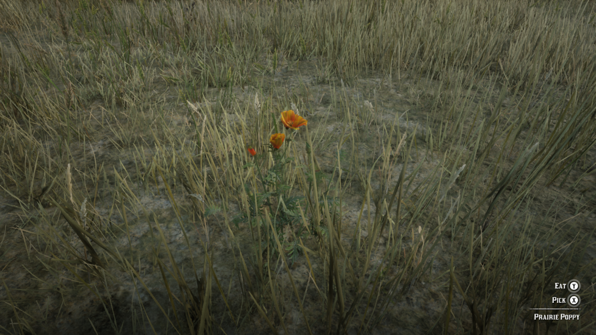 Prairie Poppy. Can be found in the Great Plains of West Elizabeth.
