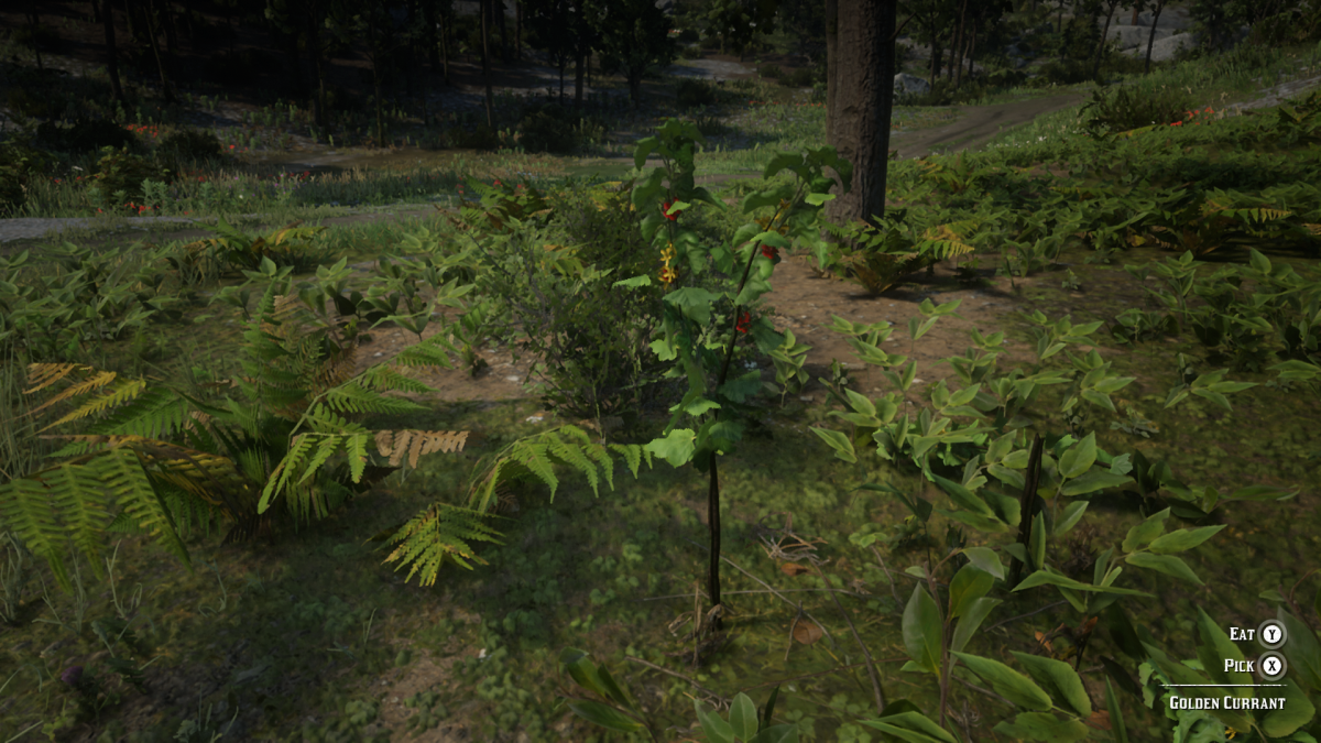Apart from Yarrow and Burdock Root this is your third important ingredient in making Special Miracle Tonic. You can find it growing in the forests East of Emerald Ranch.