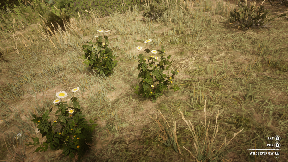 Wild Feverfew. Not as plentiful as I remember it being in Red Dead Redemption 1. You can still find it outside of Armadillo.