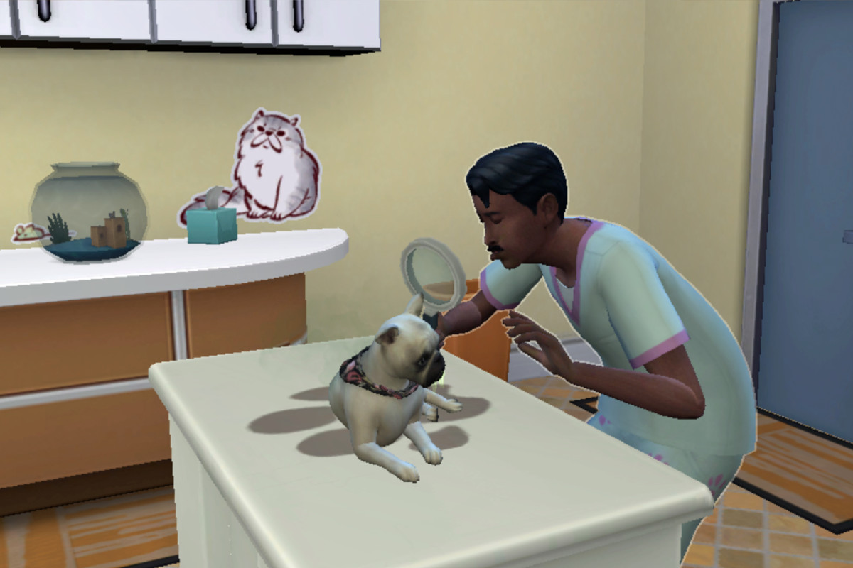 I think running a veterinary hospital is kind of fun!
