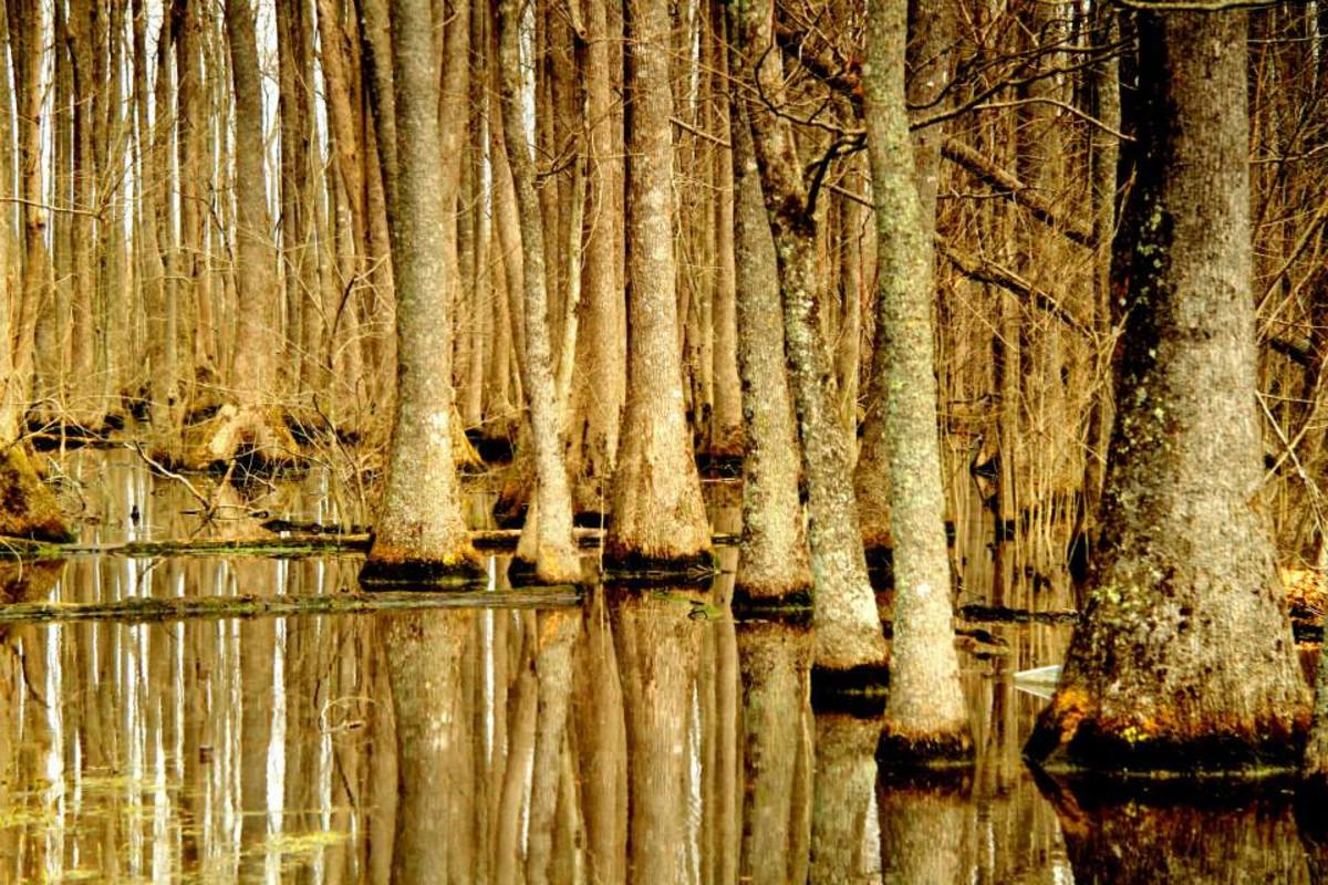 Poetry of the Swamps: A Poetic Swampy Conundrum