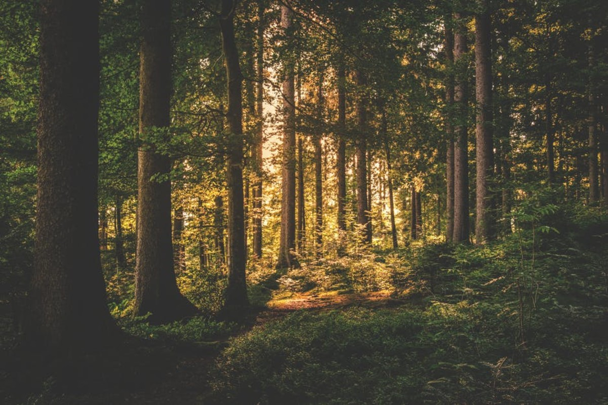 the-secrets-of-the-forest-chapter-2-written-by-adam-hwang