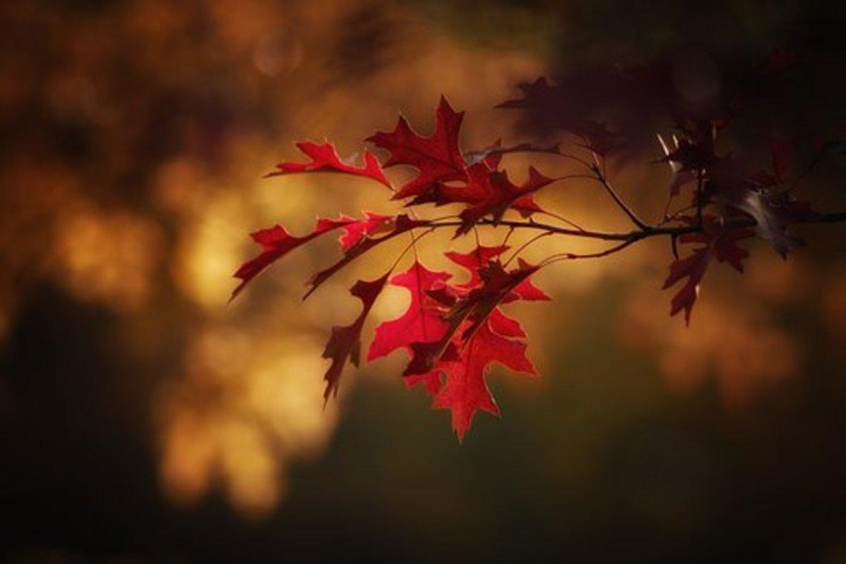 5 Fall/Autumn Haikus